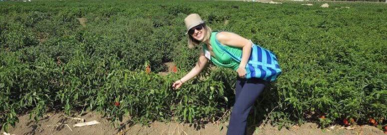 Is Monsanto Evil? (+ How I Got Paid in Veggies, not Bucks)