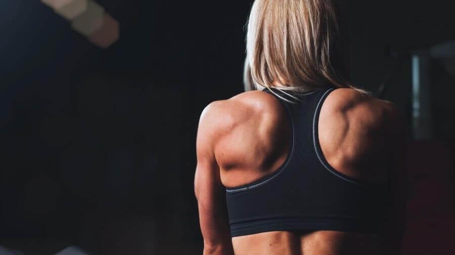 muscle metabolism