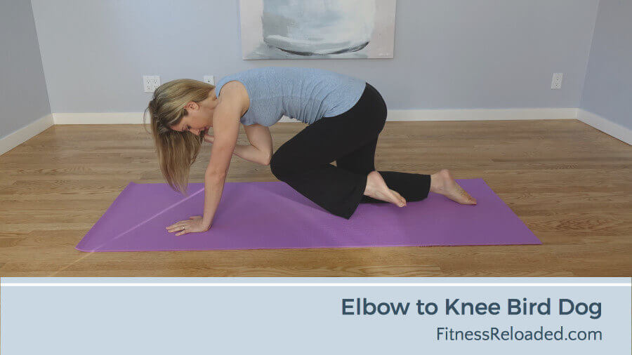 elbow to knee bird dog exercise variation