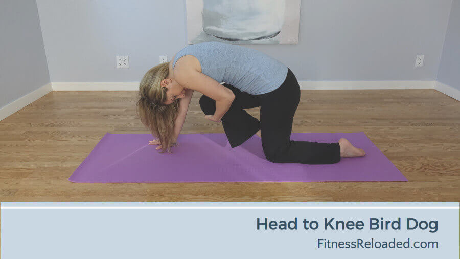 head to knee bird dog exercise variation